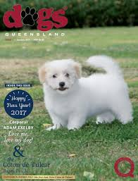 belgian shepherd qld dogs queensland the queensland dog world issue 1 january