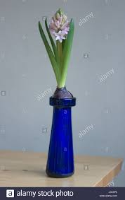 antique victorian glass hyacinth bulb vases with bulbs which are
