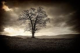 black tree photograph by svetoslav sokolov