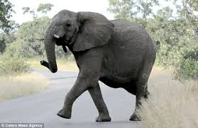 The Blind Men And The Elephant Analysis South Africa Elephants Are Spooked By A Swarm Of Bees Daily Mail