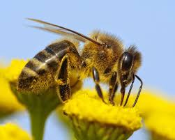 want to help the bees keep these out of your garden popular