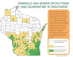 emerald ash borer map weathering the emerald ash borer in wisconsin wiscontext