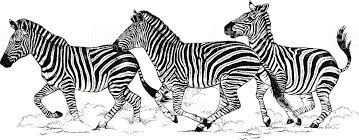 herd of zebra stock vector art 164568788 istock