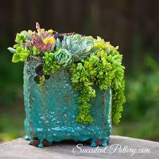 succulent arrangements succulent pottery home