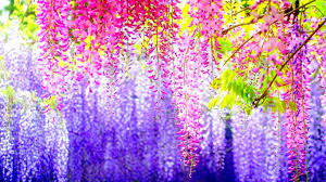 backgrounds most beautiful colorful flowers nature hd on wallpaper