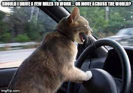 Driving Meme - cat driving memes imgflip