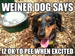 Wiener Dog Meme - funny weiner dog pictures weiner dog says iz ok to pee when