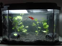 Beta Fish In Vase Betta Than A Bowl Betta Fish Aquariums U0026 Betta Tank Inspiration
