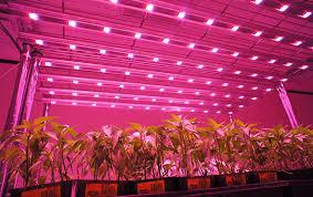 1000 watt led grow lights for sale organic product lifestyle