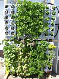 grow wall home hydroponic system for an edible wall