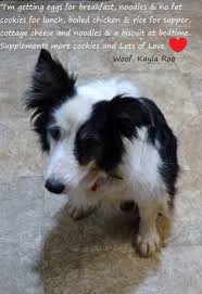 oaic inc indian summers border collie rescue petfinder foundation