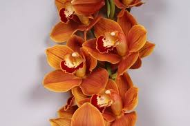 cymbidium orchid orange cymbidium orchid 10 stems jr roses wholesale flowers