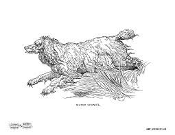 dog coloring page water spaniel miss mary u0027s gazette