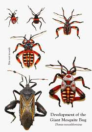 arizona beetles bugs birds and more september 2014