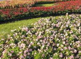 the most beautiful flower gardens in london appleyard blog dunneiv