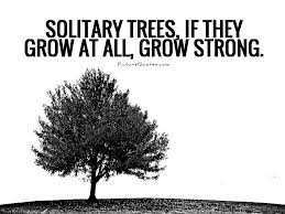 solitary trees if they grow at all grow strong picture quotes