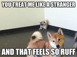 Sad Pug Meme - pug feels an overwhelming sadness coming on this ruff day