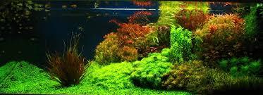 Aquascape Tank Aquascape Aquarium Freshwater Aquarium Plants For Beginners