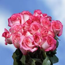 wholesale roses cheap roses wholesale find roses wholesale