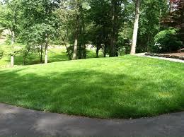 charlotte lawn care fertilization and weed control porgram