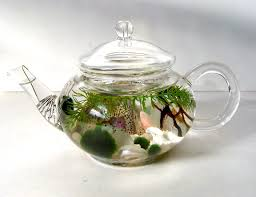 mini glass teapot green tea marimo moss ball