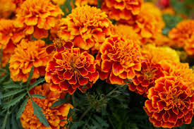 birth month flowers and meanings what is your birth flower