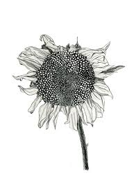 25 gorgeous sunflower drawing ideas on pinterest sunflower