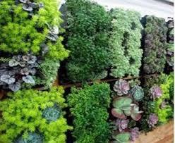 12 pocket outdoor vertical living wall planter delectable garden
