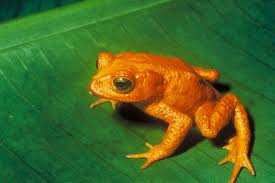 free frog picture 100 images frog png images transparent free