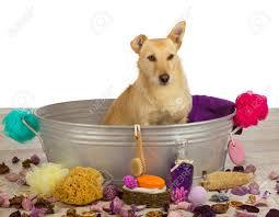 Dogs In The Bathtub Articles With Dog In Bathroom Meme Tag Superb Dog In Bathtub Photo
