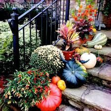 Fall Decorated Porches - pumpkin decorating ideas porches gourds fall bombay outdoors