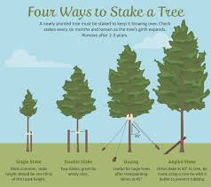 tree stakes selecting the right tree for your garden backyard gardens and