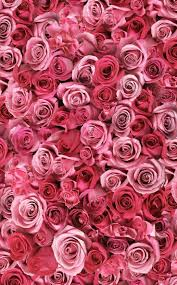 Pink Roses Wallpaper by 29 Best Wallpapers Images On Pinterest Beautiful Roses Hd