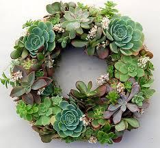 succulent wreath fail succulent wreath inspiration cool