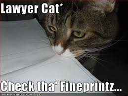 Lawyer Dog Meme - lawyer cat meme in threat to lawyer dog supremacy legal cheek
