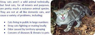 Keep Cats In Backyard How To Get Rid Of Stray Cats In Yard Home Or Under House