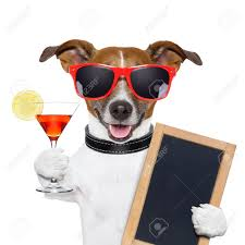 birthday martini white background funny cocktail dog holding a martini glass stock photo picture