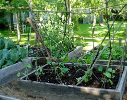 Growing Cucumbers Up A Trellis The Twig Cucumber Trellis Women Who Run With Delphiniums