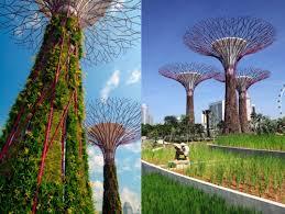 last civilized yank solar trees singapore