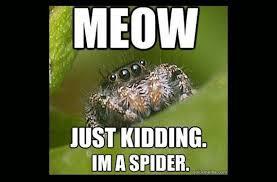 Spider Meme Misunderstood Spider Meme - misunderstood spider meme barnorama