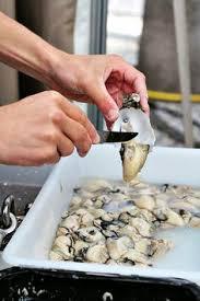 cuisine garance les cuisines de garance des huîtres cuisine