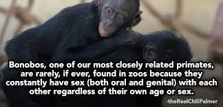 Sexy Monkey Meme - 17 weird sex facts you ll remember forever collegehumor post
