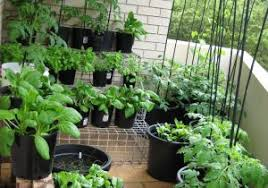 kitchen gardening ideas kitchen garden in balcony beautiful balcony garden ideas for an