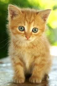 best 25 kitten names ideas on pinterest boyfriend pet names