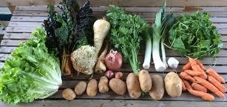 Green Root Vegetables - blog cully neighborhood farm vegetables for neighbors