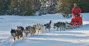 Dog sledding Churchill Manitoba Canada GREAT PETS