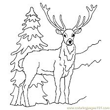 deer ice coloring free deer coloring pages