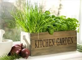 Indoor Herb Garden Kit Best Herb Growing Kits For The Kitchen Houseplant