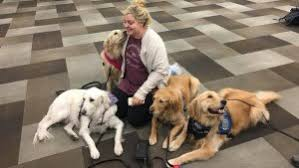 Comfort Retrievers Illinois Comfort Dog Sent To Vegas To Meet With Victims First