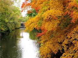 michigan university campus fall beautiful